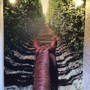 stenska-nalepka-konj