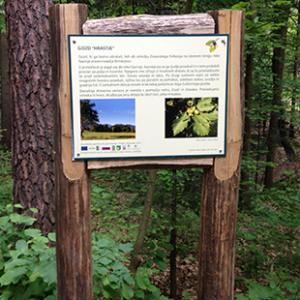 Gozdna učna pot Hrastje